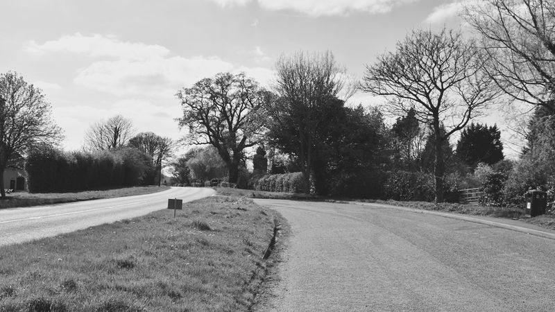 Taking Photos Harlaxton Road Trees Nikon D5500