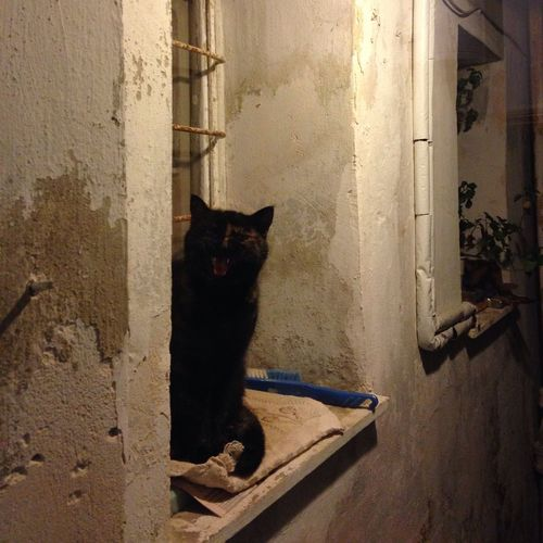 My cat… Cat Window Angry Vampire