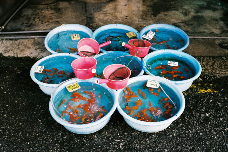 Fishes are ready to sell at the fish shop. Nice display of the fishes. Love the colors. Taken with Leica M6 / Voigtlander 35mm F1.4 / Agfa Vista 200 Film Photography Film Photography Never Die First Eyeem Photo Fish Fish Shop Fishes Large Group Of Objects Leica Film Camera Leica Film Camera Image Leica Film Camera Photo Multi Colored No People Outdoors Selling Fishes Selling Fishes At Road Side First Eyeem Photo