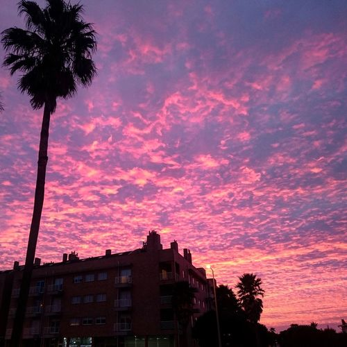 Another Day Pinkday Pinksky Pinkskysunset Natureza Thebest Portugal City Tree Astronomy Sunset Silhouette Sky Architecture Building Exterior Magenta Palm Tree Dramatic Sky
