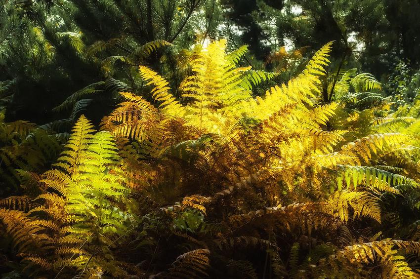 Creech Wood Ferns Autumn Nature Creech Woods Forest Of Bere Backgrounds Full Frame Tree