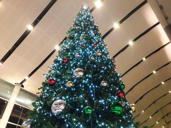 Tree Christmas Decoration Illuminated Christmas Lights Christmas Ornament Christmas Holiday - Event Celebration christmas tree Tradition