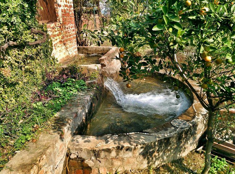Garden Water Nature Orange Tree Green Pool Village Haryana India