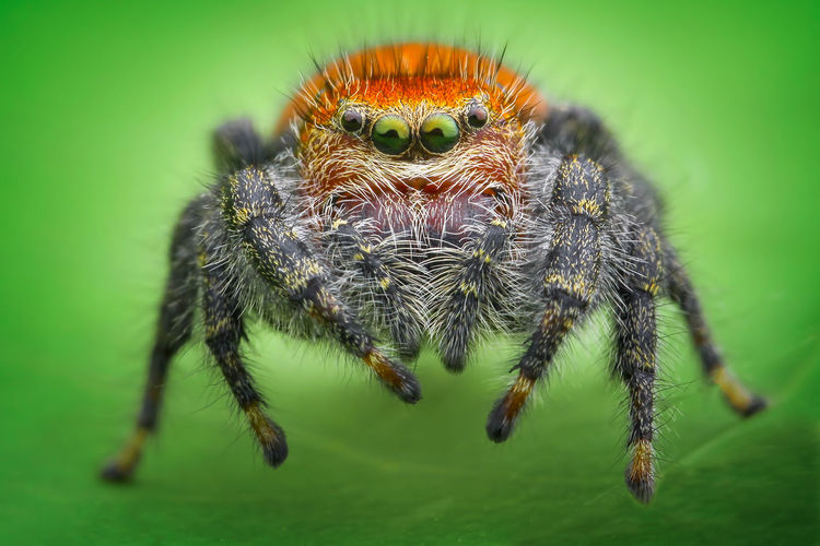 Close-up of spider over green background