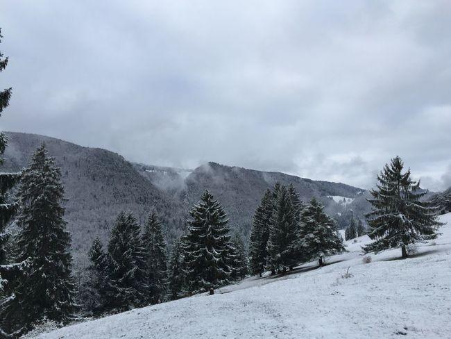 Snow Winter Jura Found On The Roll