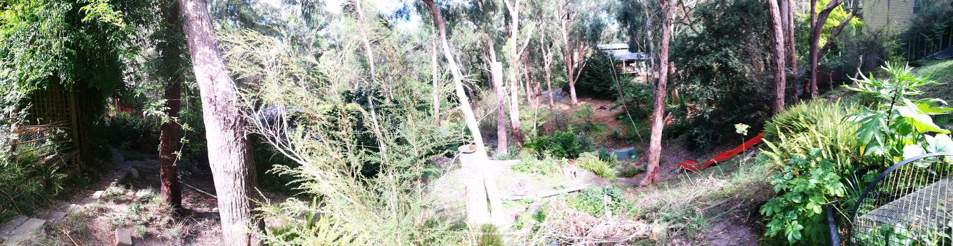 beautiful back yard Forest