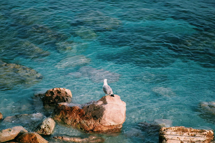 High angle view of seagull on rock by sea