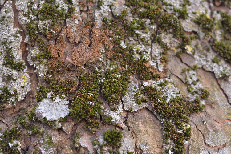 Beauty In Nature Close-up Day Green Growth Lichen Moss Nature No People Outdoors Textured  Tree Tree Bark Tree Bark Texture Tree Branches Tree Trunk