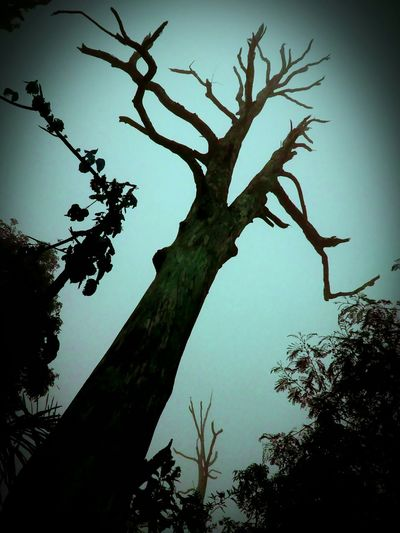 Jungle Trekking Olddeadtree, Forest INDONESIA Creepy