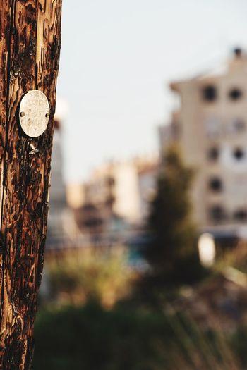 Wood City Lebanon Taking Photos Bokeh Bokeh Photography Flies Electric Pole