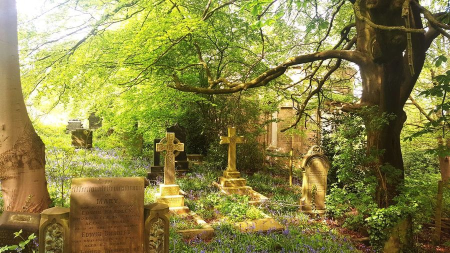 Church Abandoned Buildings Derelict Place Overgrown Graveyard Gravestone Grave Nature Tree Branch Sunlight Shadow Green Color