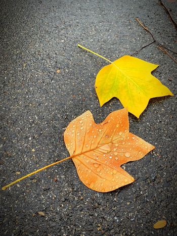 Yellow Road Leaf Plant Part High Angle View Symbol Sign Change No People Asphalt Marking Transportation Road Marking Direction Guidance Autumn City Day Street Textured