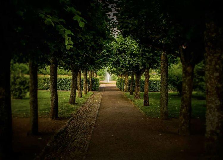 Garden Park Tree Nature