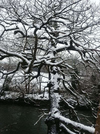 Tree Branch Nature No People Bare Tree Growth Outdoors Day Beauty In Nature Tranquility Sky Water Scenics River Hafren Wales Oak Winter Snow Newtown Powys Oak Tree