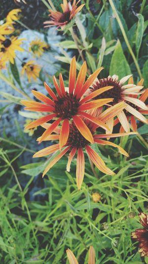Flowerpower Flowers Flowerporn 🌷 Flowers 🌹 Flowerpower🌸 Boulevard Downbythebay Orangeflower