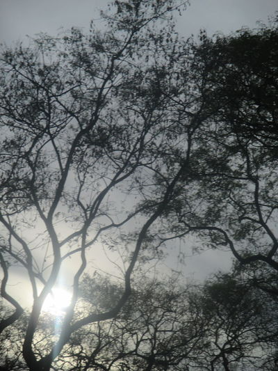 #cold Day #darkness #hope #pessimism #romantic Photo #romanticism #sadnesss #shadows And Lights #thoughtfulness Beauty In Nature Branch Day Growth Low Angle View Nature No People Outdoors Scenics Silhouette Sky Sunlight And Shadow Tranquil Scene Tranquility Tree Worries