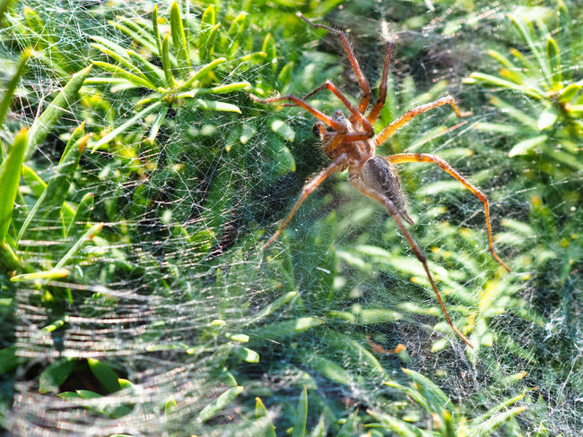Jeans Brown Photography - Jeans Brown Photography Spider Animal Animal Leg Animal Themes Animal Wildlife Animals In The Wild Arachnid Arachnophobia Close-up Day Fragility Green Color Growth Insect Invertebrate Leaf Nature No People One Animal Outdoors Plant Plant Part Spider Spider Web Spiderweb Web