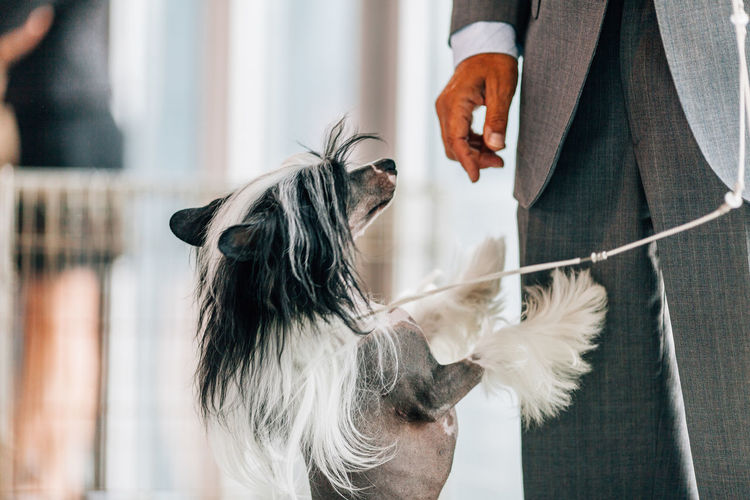 Midsection of well-dressed man with dog standing at home