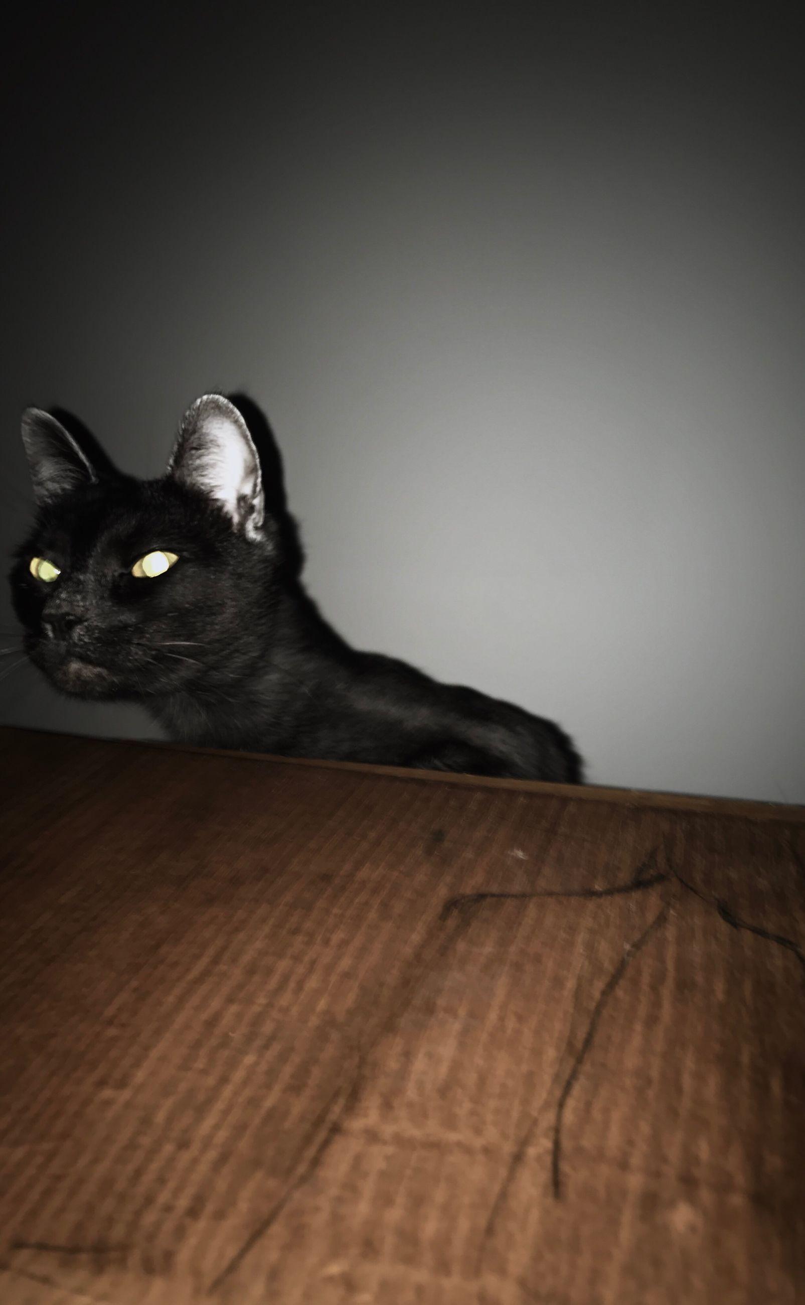 pets, one animal, domestic animals, mammal, animal themes, indoors, domestic cat, no people, feline, animal eye, close-up, day