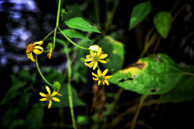 Leaf Green Color Flower Plant Nature Outdoors Yellow One Animal Beauty In Nature Day Nature Reserve Living Organism Animal Wildlife Growth Animals In The Wild Plant Part No People Biology Summer Fragility