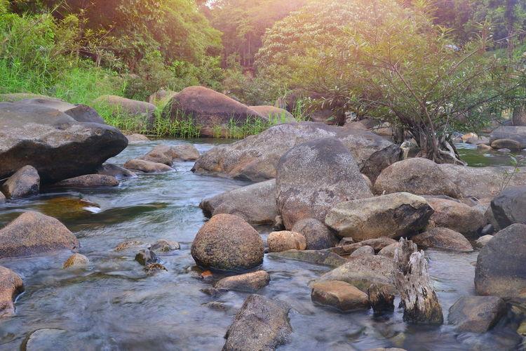 Stream Forest