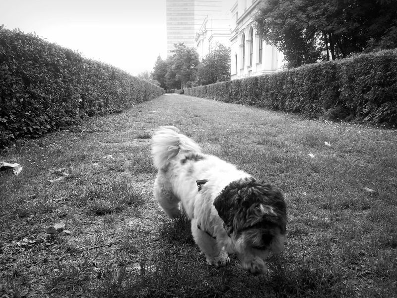 Dogs Blackandwhite Photography Dogsofinstagram Dog Love Dogwalk BlackandwhitedogMy best friend :)