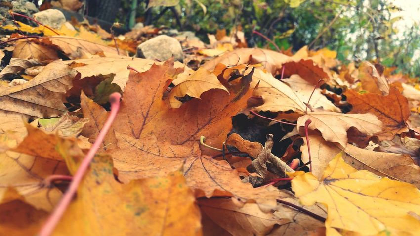 🍁🍂autumn 🍁just Leaves.... Fall Leaves Colourful Shotoftheday Leavesontheground Likecolors Cold Days Peace And Quiet Romania Romance FollowMe😏😼 Bestphoto Cute♡ Walking Around Nature !