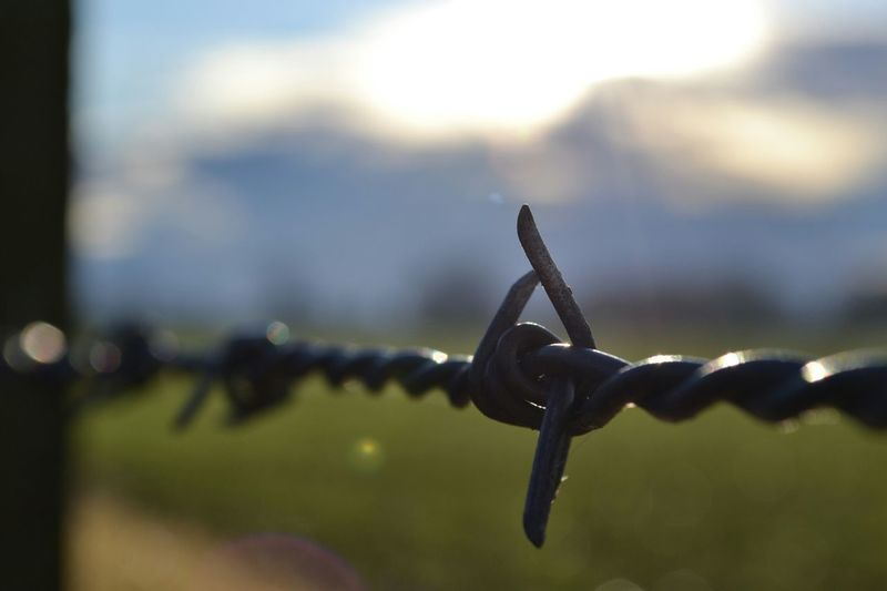 Up Close Down On The Farm Barbed Wire Point Of View Selective Focus Manual Focus Softcolors Pastel Colors Lens Flare