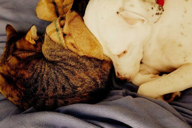 Puppy and Kitty Love Closeup Shots Closeup Of Puppy's Face Closeup Of Cat Kitty And Dog Cat And Dog Indoors  Bed No People Close-up Mammal Animal Themes Day