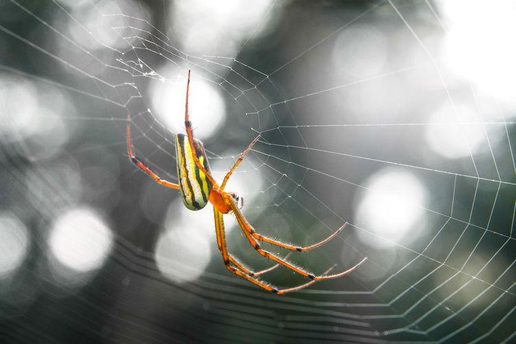 蜘蛛 Trapped