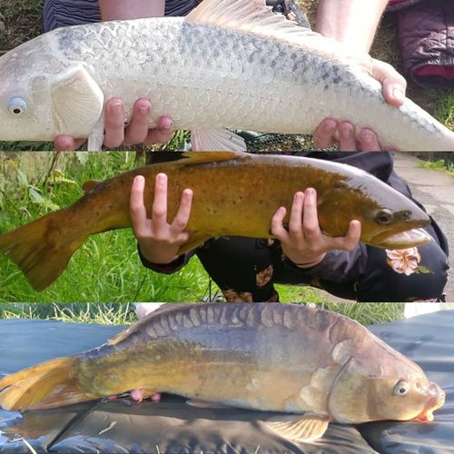 lovely summer!!! Girlsfishtoo Canal Canals And Waterways Rochdalecanal Huddersfield Narrow Canal Trout Fishing Carp Ghostcarp Ghost Car Sea Life UnderSea Water Sea Seafood Fish Market Catch Of Fish Fish Animal Scale Market