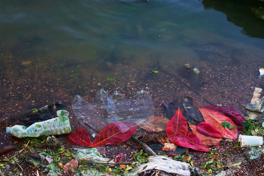 garbage in water : Beauty In Nature Close-up Day Environmental Issues Garbage Garbage In Nature Garbage In The River High Angle View Lake Leaf Nature No People Outdoors Pollination Unhygienic Water Water Pollution Plastic Environment - LIMEX IMAGINE