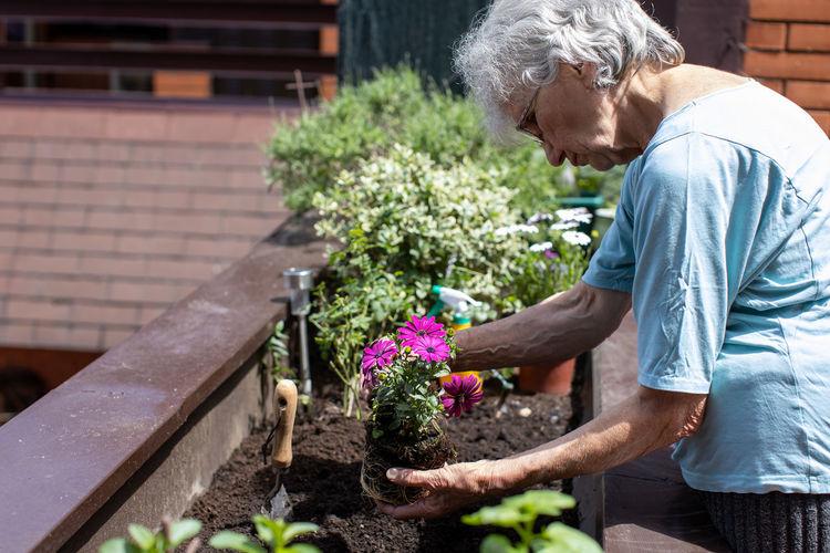 Elderly woman planting flowers in her small terrace garden