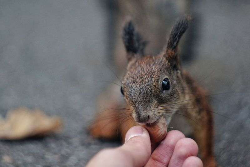 Cropped image of person feeding squirrel