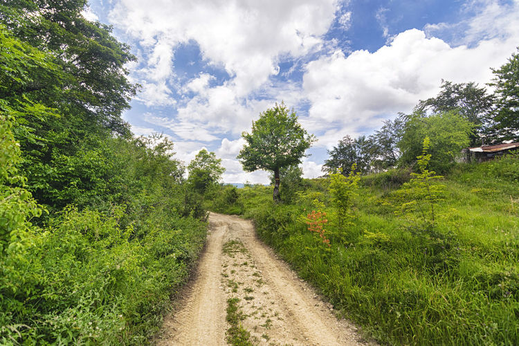 Dirt road along plants and trees against sky