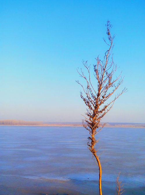 Thicket Reed Wintertime River Collection Riverscape Riverside Rivers Nice Day Blue Lake Scenery Check This Out EyeEm Nature Lover Blue Sky Horizon Over Water Horizon Ice Ice Lake Grove Scenery Shots Horizons