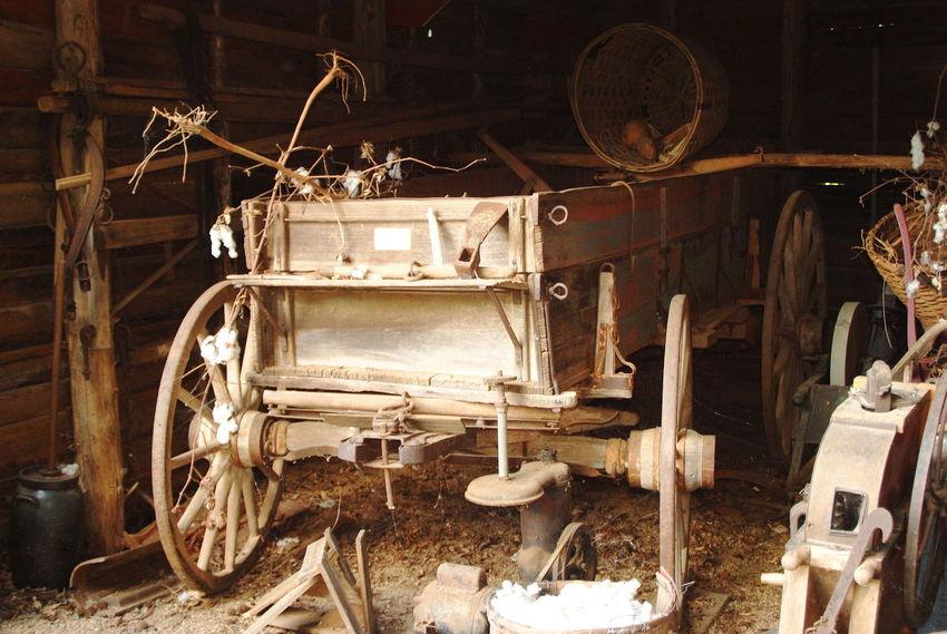 Cotton Farming Horse Drawn Wagon Old Buckboard