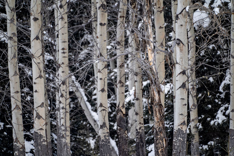 Full frame shot of icicles on tree trunk during winter