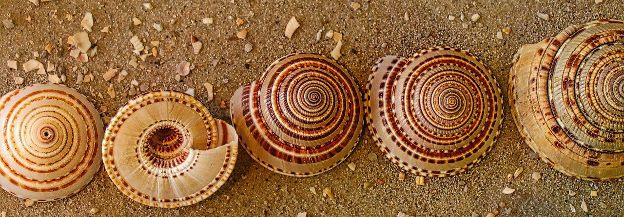 spiral, land, shell, close-up, animal wildlife, no people, sand, pattern, day, animal shell, high angle view, animal, nature, shape, beach, brown, directly above, outdoors, beauty in nature, seashell, ornate