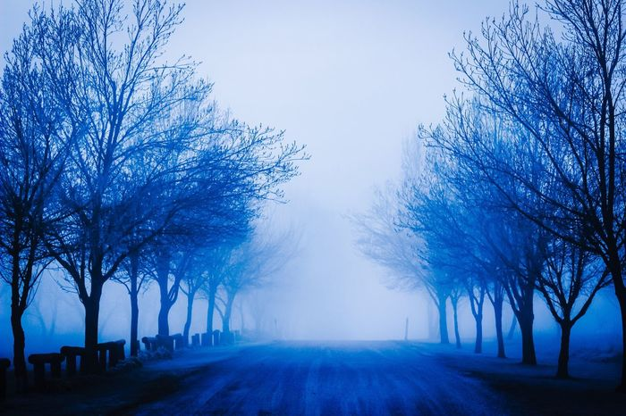 Haunting  Spooky Atmosphere Tree Lined Blue Color Tree_collection  Tree Bare Tree The Way Forward Diminishing Perspective Tranquility Nature Tranquil Scene Beauty In Nature Winter Scenics Fog Branch Cold Temperature Landscape Outdoors Day No People Sky dawn Misty Morning