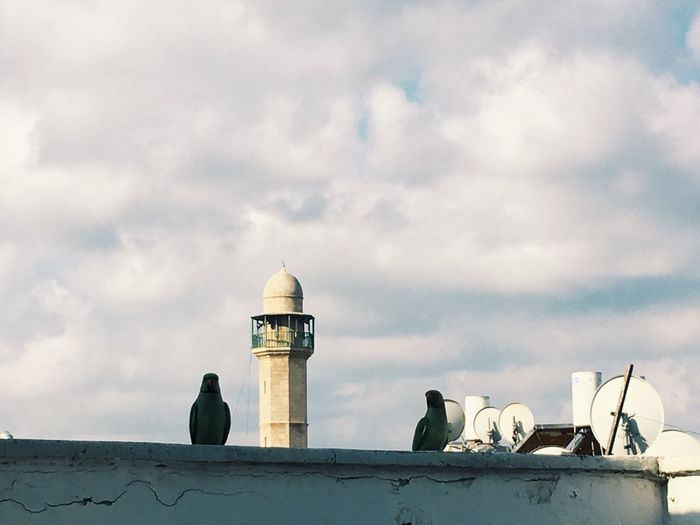 Cloud - Sky Sky Bird Outdoors Parrots City Satellite Dish Mosque Cloudy Architecture Cold Silhouette Rooftop Visitor Stare Presence Still Piece Wall East Religion Believe View