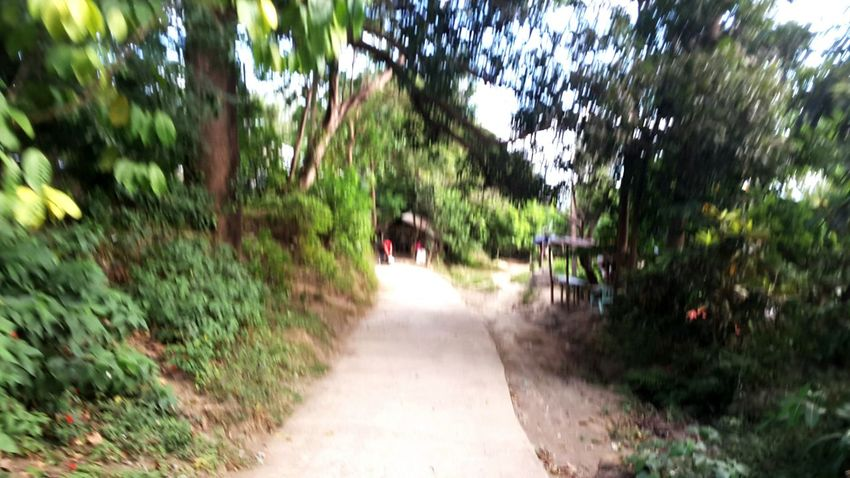 Blurred road. The Way Forward Tree Nature Day Outdoors Road Beauty In Nature One Person Bamboo Grove People