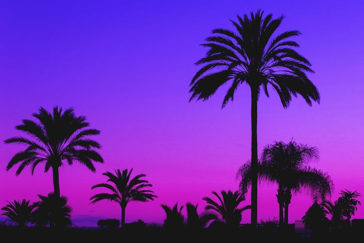 Silhouette palm trees against blue sky at sunset