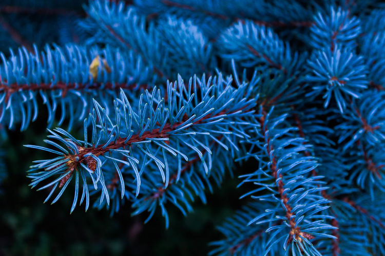 Beauty In Nature Blue Day Fir Tree Growth Marine Nature Pine Tree Plant Plant Part Tree Water