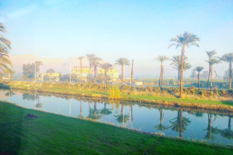 Aswan, Egypt Beauty In Nature Day Grass Lake Luxor Morning Nature No People On The Road Outdoors Palm Tree Reflection Sky Train Travel Travel Destinations Travel Photography Traveling Traveling By Train Traveling Home For The Holidays Travelphotography Tree Upper Egypt  Water