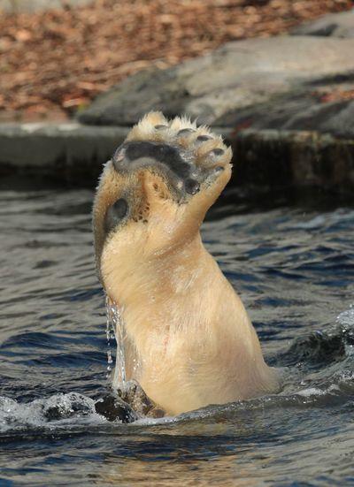 Water One Animal Animal Themes ZOO-PHOTOdNo PeopleeDayyOutdoorss SwimminggNaturee Close-upp