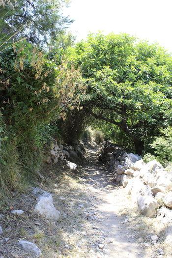 Sentiero - Baia