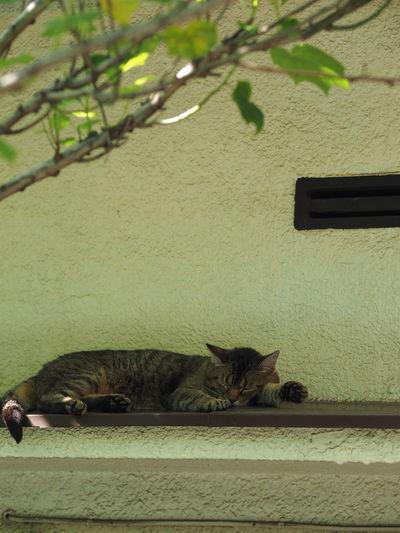 左前足の向きが、何だかおかしい(笑)。Neighborhood Stray Cat Summertime Streetphotography Hot Day Summer Relaxing Taking Photos Taking Pictures Morning Cat Shade Paw Pad 肉球 Olympus