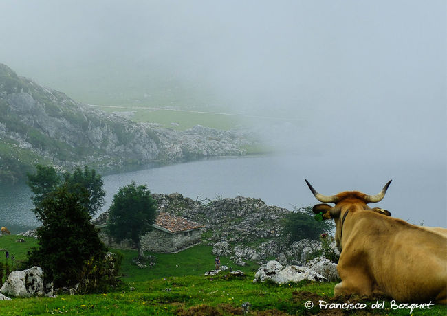 Animal Themes Asturias Asturies Celtic Covadonga España Franciscodelbosquet Fuji X20 Hiking Holiday Landscape SPAIN