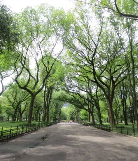 Central Park Trees Nature The Path
